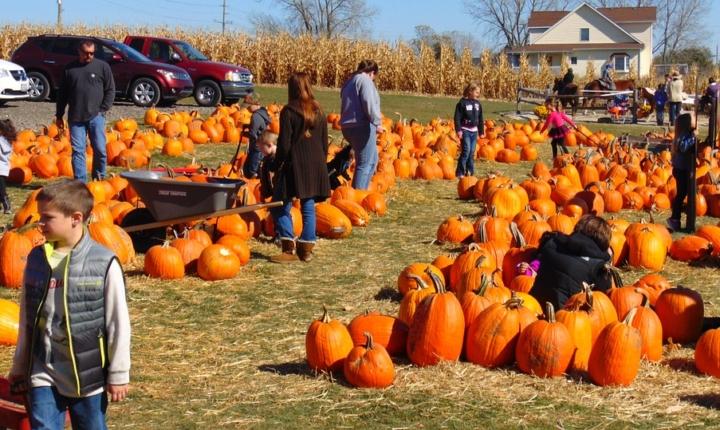 収穫の秋(ハロウィンについて・・・)